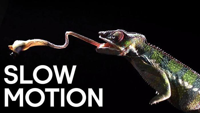 Graba vídeos slow motion con aplicaciones muy eficaces
